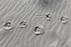 Pfoten im Sand
